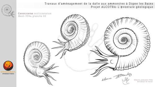 Ammonite-planche-02-(c)-MarcBoulay