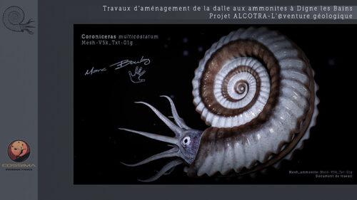 Ammonite_Planche-03g-(c)-MarcBoulay
