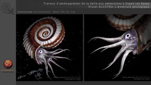 Ammonite_Planche-04b-(c)-MarcBoulay