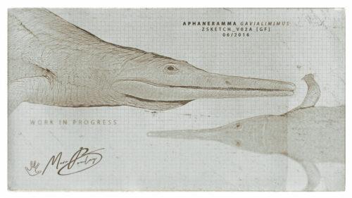 Aphaneramma-gavialimimus-(c)-MarcBoulay