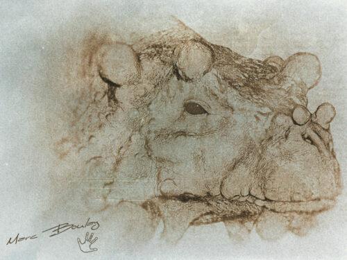 Bunostegos-01-sketch2015 (c) MarcBoulay