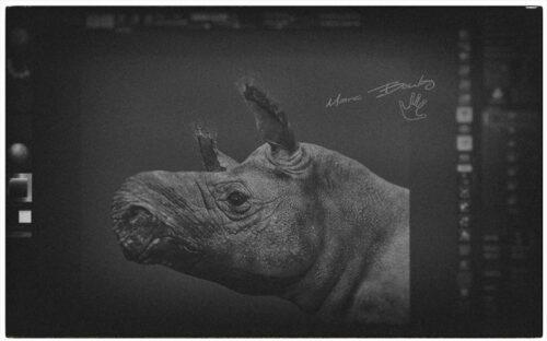 Diaceratherium-Workflow(c)MarcBoulay