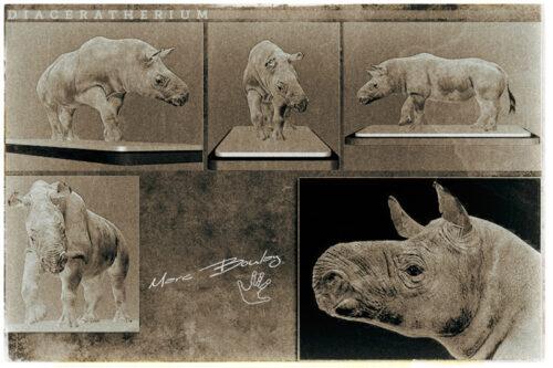 Diaceratherium(c)MarcBoulay