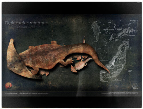 Diplocaulus_poster-(c)MarcBoulay