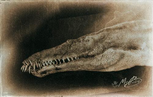 Liopleurodon-(c)-Marc-Boulay
