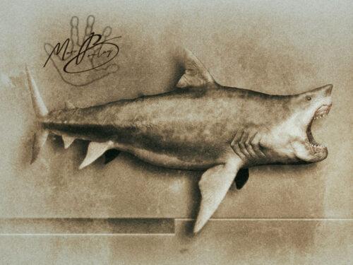 Megalodon (c) MarcBoulay