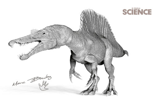 PLS-Spinosaure-V01 (c) MarcBoulay