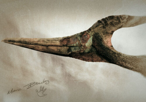 Pteranodon-ingens (c) MarcBoulay