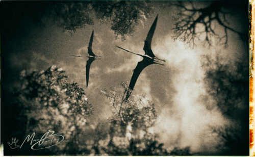 Quetzalcoatlus-sky(c)MarcBoulay