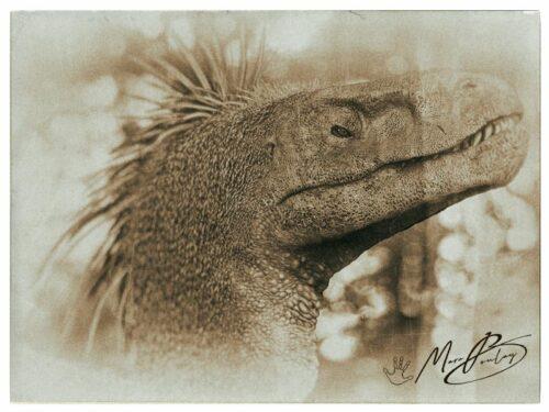 Raptor-affiche-(c)-MarcBoulay