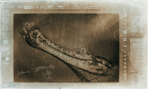 Sarcosuchus-imperator-workflow1 (c) MarcBoulay