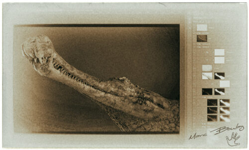 Sarcosuchus-imperator-workflow2(c)MarcBoulay