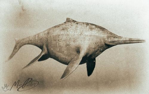 Shonisaurus (c) MarcBoulay