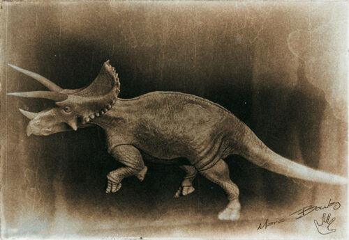 Triceratops-v02a(c)MarcBoulay