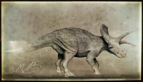 Triceratops_V05g-(c)-MarcBoulay