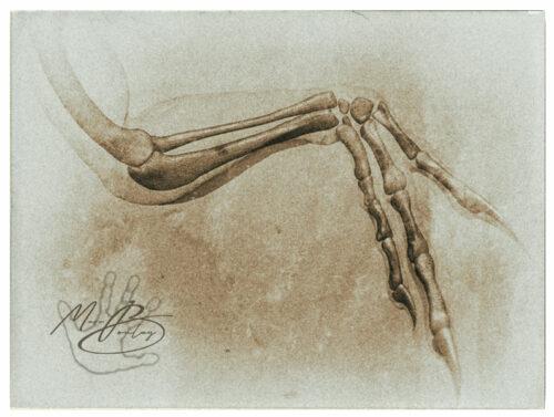 Utahraptor_Plate-87b(c)MarcBoulay